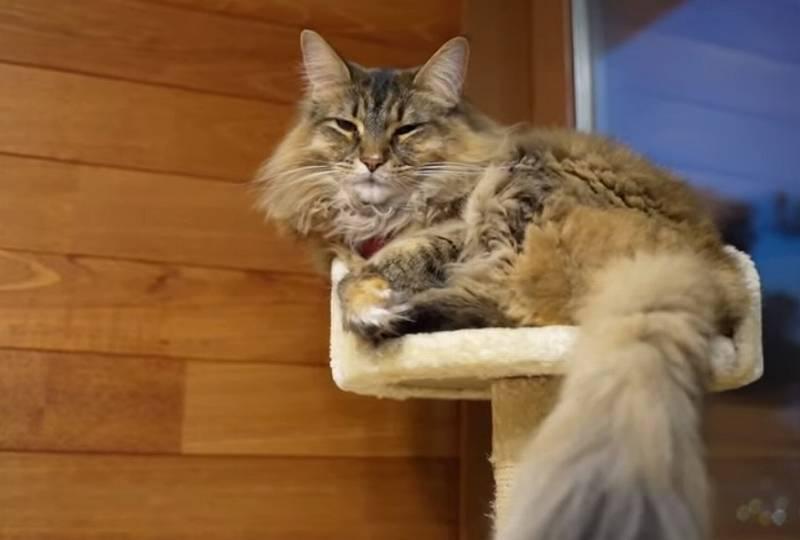 吉田類の愛猫ララ1